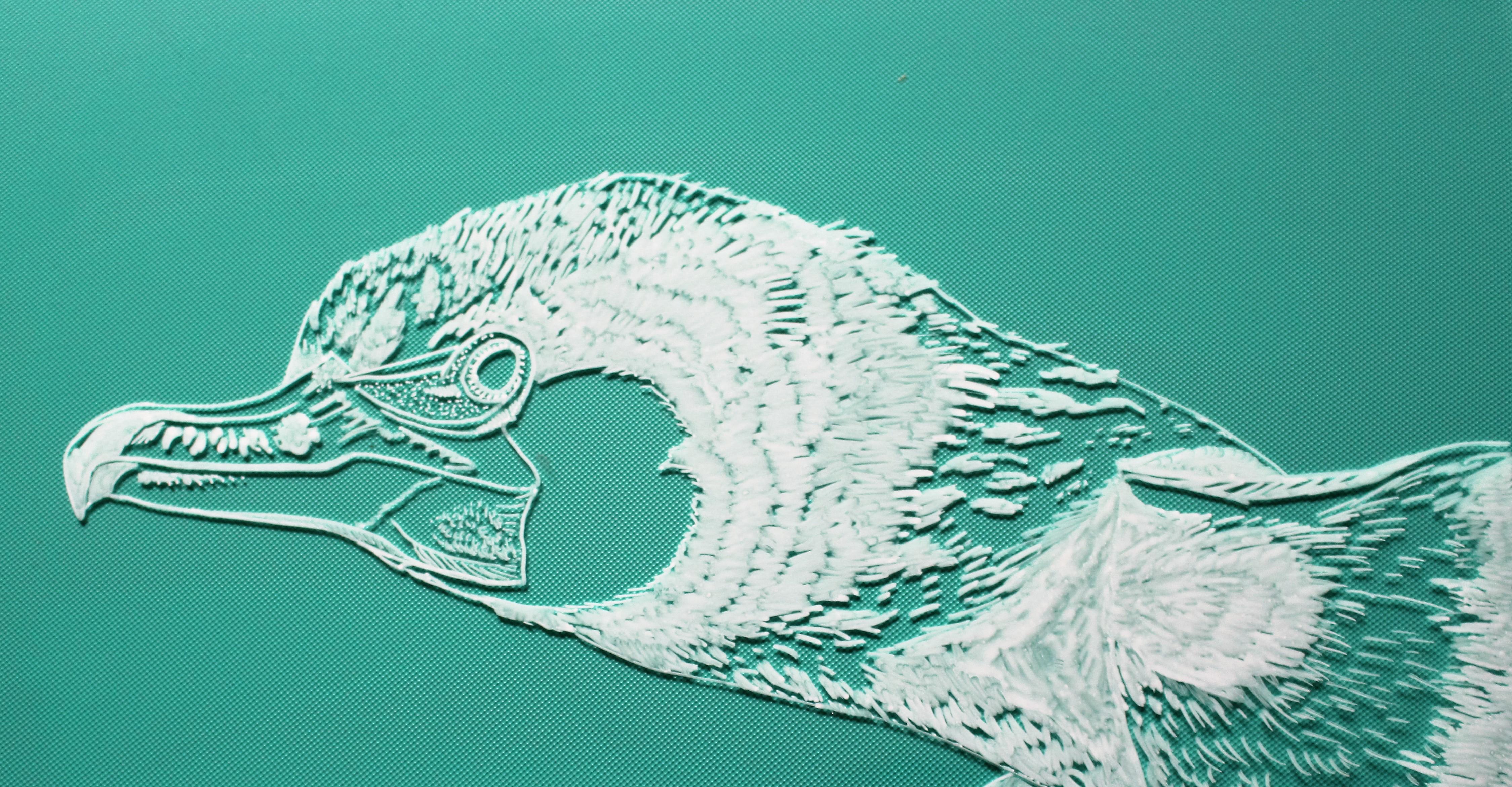 raamtekening aalscholver op fotolijst
